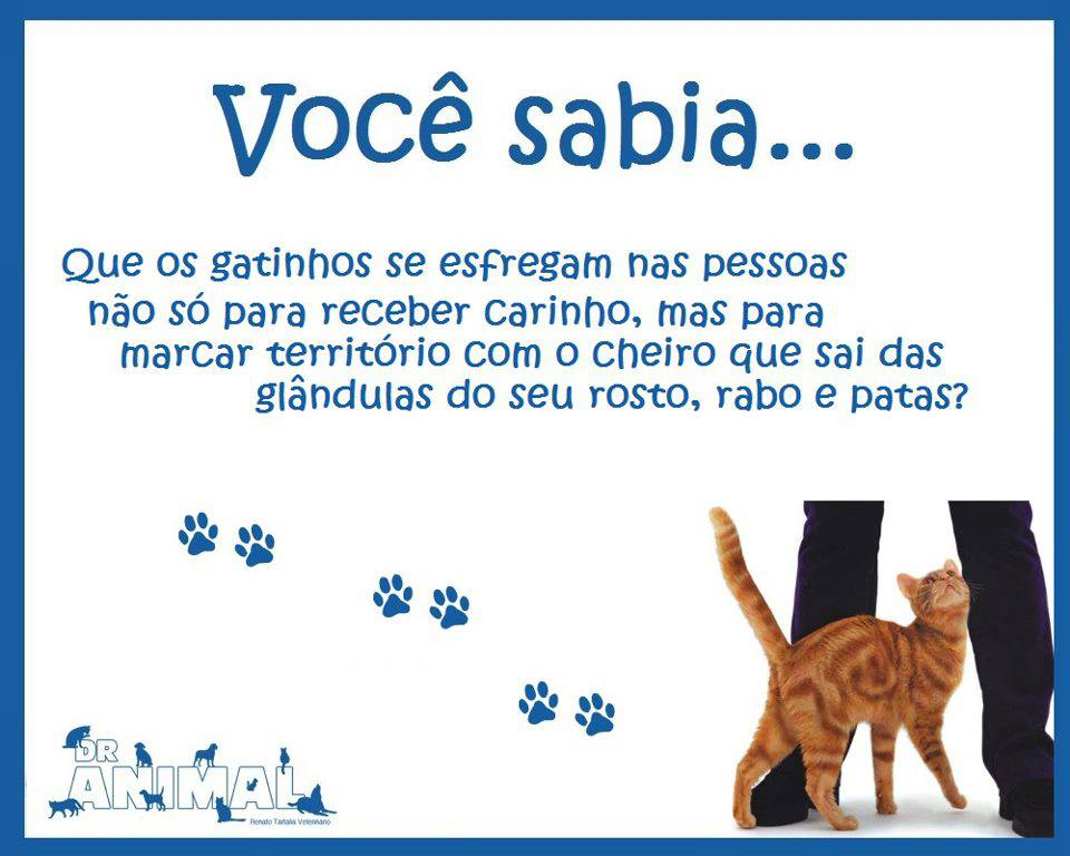 Voc sabia gatos se esfregam nas pessoas gatil spiritland blog 943396473286202747616763841845n altavistaventures Images