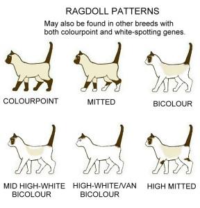 ragdoll-patterns